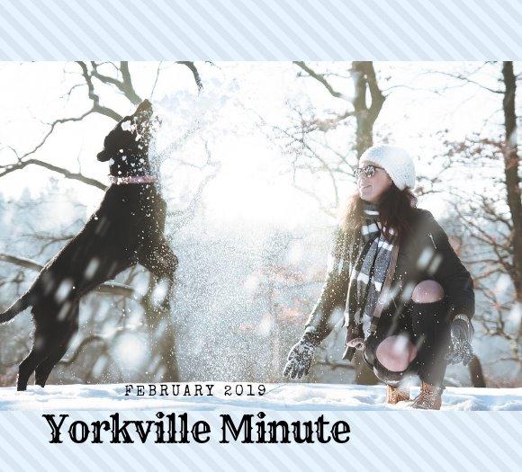 February 1, 2019 Yorkville Minute