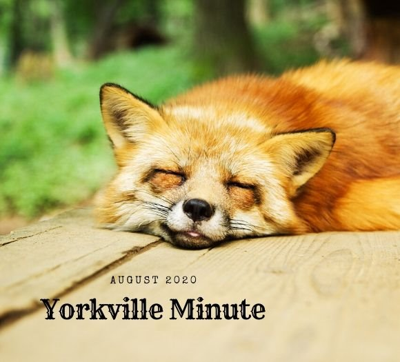 The Yorkville Minute - August 17, 2020