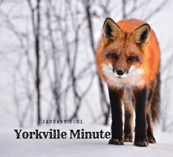 The Yorkville Minute - January 4, 2021 Edition