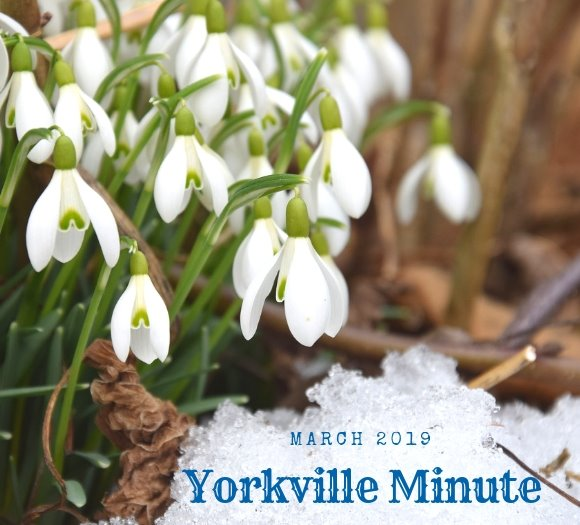 Yorkville Minute March 1, 2019