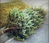 Advanced Disposal Christmas Tree Pick-Up