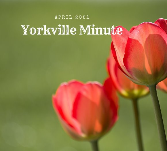 The Yorkville Minute - April 1, 2021 Edition
