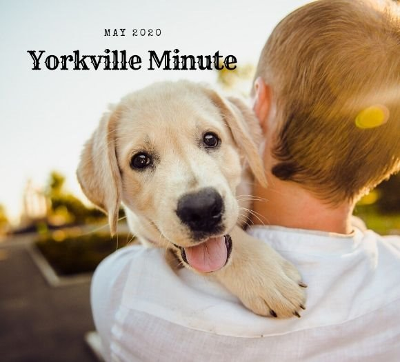 The Yorkville Minute Newsletter, May 1, 2020 Edition