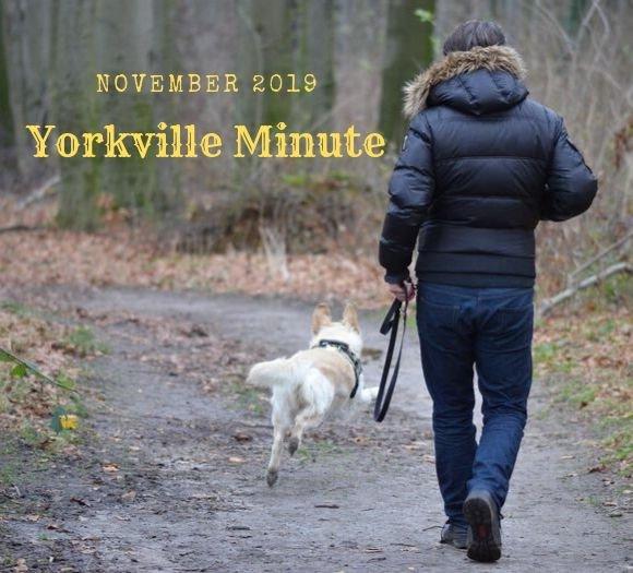 Yorkville Minute, November 15, 2019 Edition