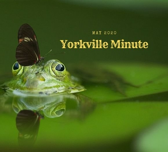 The Yorkville Minute Newsletter - May 15, 2020
