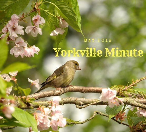 Yorkville Minute - May 15, 2019 Edition