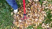 Leaf Pick-Up