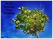50 50 Tree Program