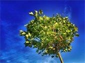 50/50 Tree Program