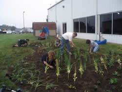 A group of people tend to a local rain garden