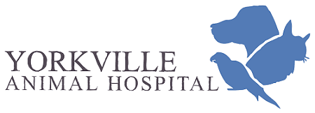 yorkville animal hospital-small